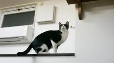 自由な猫たちに癒される 猫カフェ「ロゼッタ」