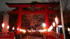 米野宮神社の桜 ライトアップ2016