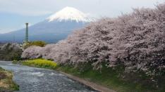 最高の撮影スポット 龍厳淵の桜と富士山2016