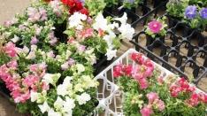 【レポ】緑と花の百貨展 2016春