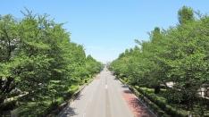 新緑の大学通り&「中央線が好きだ。」表紙写真