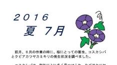【くにたち桜守】7月の桜守活動のお知らせ