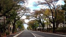 連載短編小説【風は吹いているか 第5話】『さくら通りを10往復 秋』千野龍也
