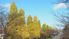 【12/4】くにたちを感じる地図旅Vol.16「観る黄葉、飲む紅葉」