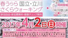 【4/2】春うらら 国立・立川さくらウォーキング