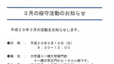 【くにたち桜守】3月の活動&桜コンシェルジェ展&ガイドツアーのお知らせ