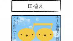 【連載】4コマまんが 音符ひよこの楽しい枝道生活(16)田植え