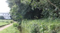 【7/9】学習講座「田んぼや湿地が育む水生生物」@くにたち郷土文化館