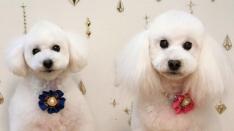 新連載【国立DOGS】#1 ネオちゃん&セナくん