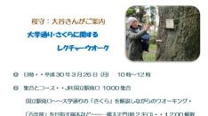【3/26】桜守:大谷さんがご案内「大学通り・さくらに関するレクチャーウオーク」