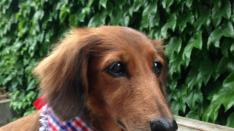 連載【国立DOGS】#2 石原家のさくらちゃん