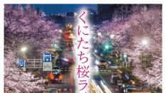 くにたち桜ライトアップ2018 五分咲き〜4/8まで