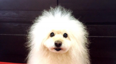 連載【国立DOGS】#3 仮屋上terrasseのくるみちゃん