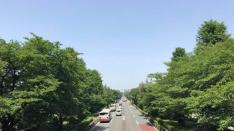 新緑の国立大学通り散歩2018
