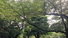 【くにたち桜守】6月の桜守活動のお知らせ