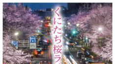くにたち桜ライトアップ2019 五分咲きスタート〜4/7(日)まで