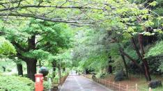 連載【国立暮らし1年目】(5)木の下に人は集う。